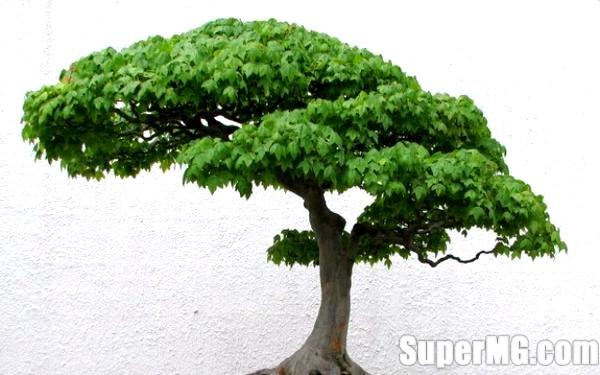 Фото: Як зробити штучне дерево: створення затишку в домі