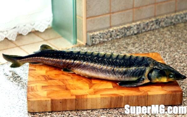 Фото: Рецепт приготування осетра: царська рибка