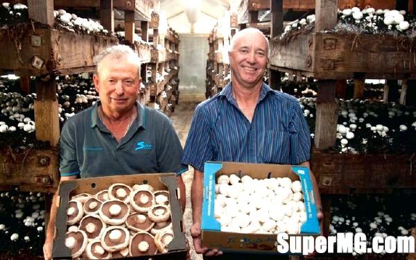 Фото: Заробіток на вирощування грибів: вигідна справа